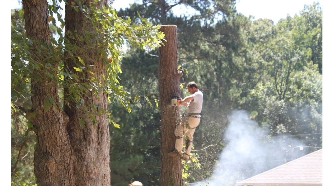 Tree Cutting, Kees Trees LLC